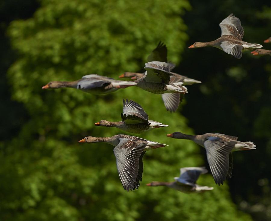 Открыта весенняя охота 2019 на водоплавающую дичь и вальдшнепа